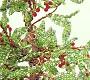 Schemi fiori e bonsai di perline come creare alberelli di for Comprare bonsai online
